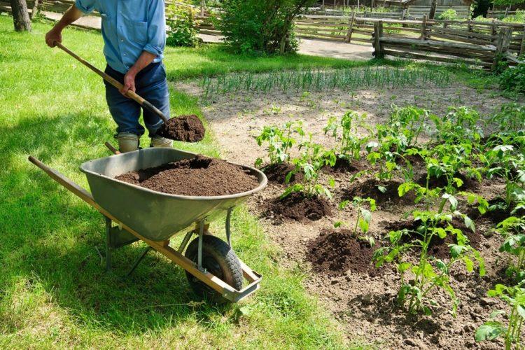 Маркировки на морковки или Круговорот питательных веществ